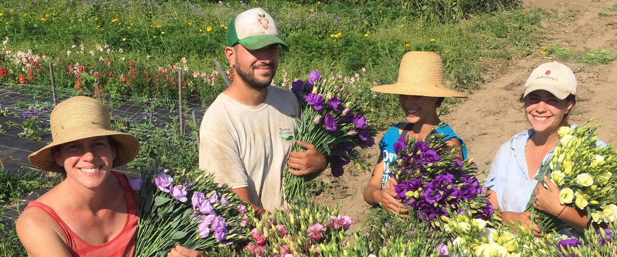 Old Friends Farm 1 - Why Buy Local Flowers